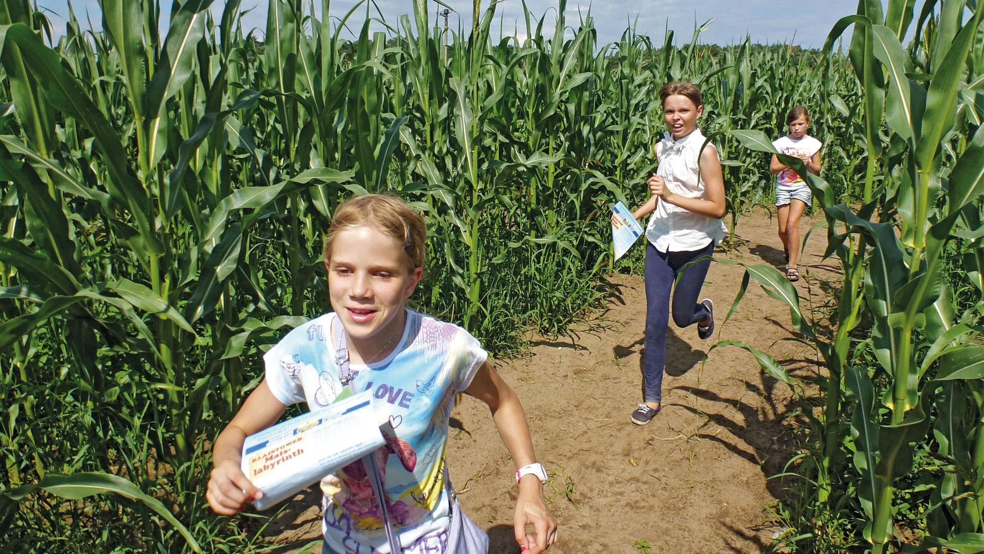Zielstrebig durch das Maislabyrinth